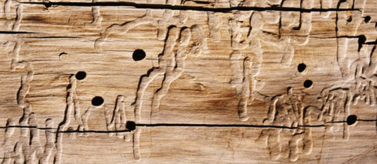 How to deal with woodworm